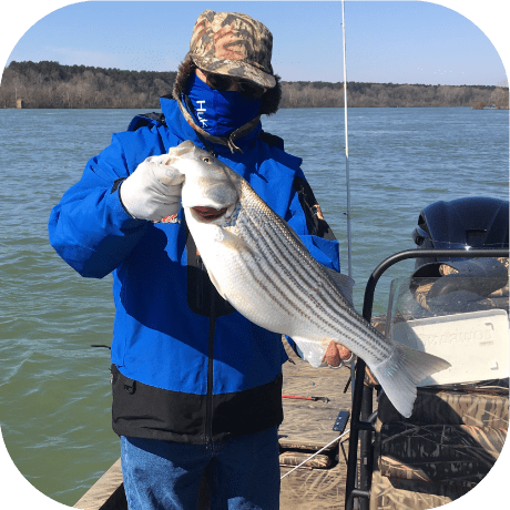 Striped Bass Pickwick Lake